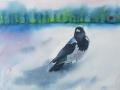 Kråkan i snölandskap