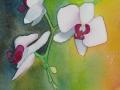 Orkidé i grönt